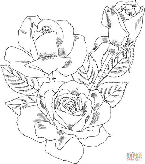 coloring book page rose double delight hybrid tea rose coloring page free