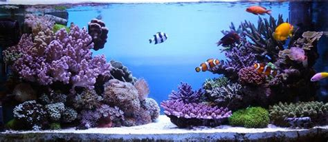 Marine Aquarium Aquascaping by On The Rocks How To Build A Saltwater Aquarium Reefscape