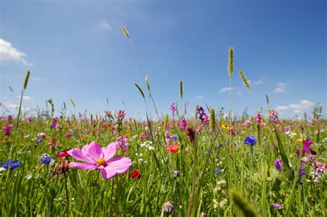 wiese anlegen sommerwiese anlegen 187 standort boden aussaat pflege