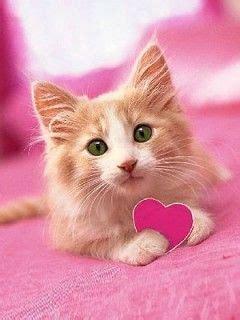 wallpaper whatsapp cats cute cats profile pictures cats profile pictures for