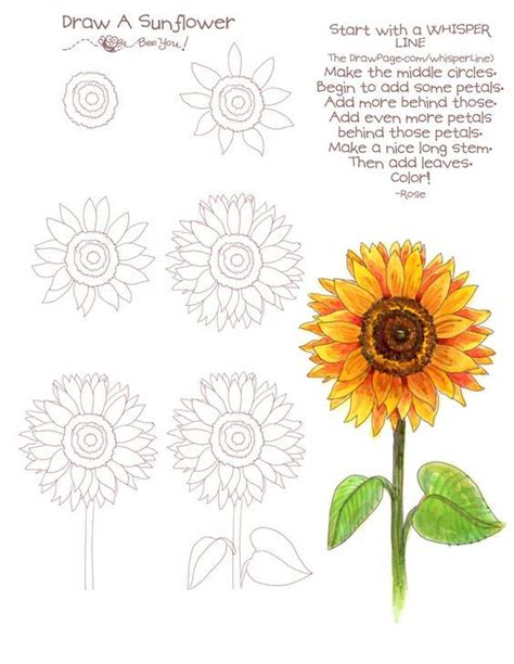 sunflower doodle god 2895 best images about drawing on drawings