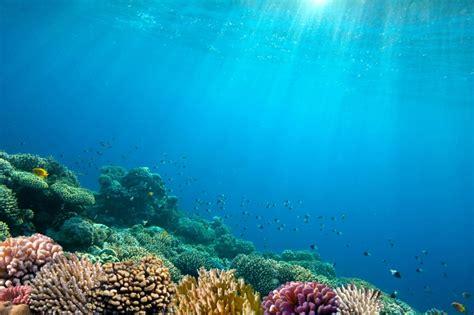 imagenes sorprendentes del oceano 7 cosas que puedes hacer para no contaminar los oc 233 anos