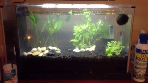 aquascaping for beginners aquascaping for beginners plants youtube