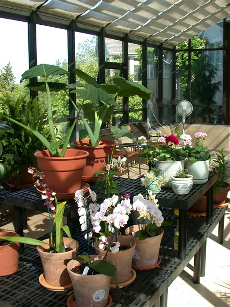 greenhouse sunroom a home greenhouse is a necessity for home growing enthusiasts