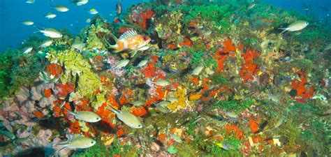 flower garden banks national marine sanctuary