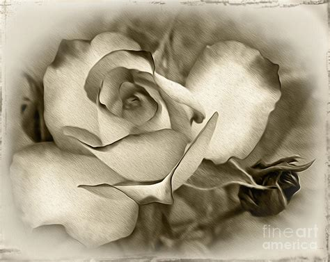 Photography Wall Art Home Decor by Antique Rose Photograph By Kaye Menner