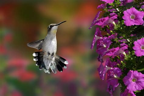 top 28 annual flowers for hummingbirds 37 flowers that attract hummingbirds to keep in your