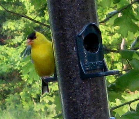 garden planting and baby birds deb s gardens
