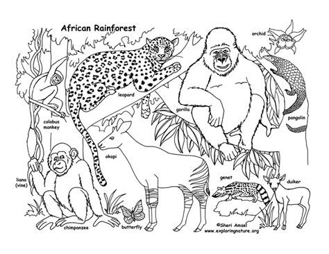 coloring pages of animals in their habitats drawn jungle rainforest ecosystem pencil and in color