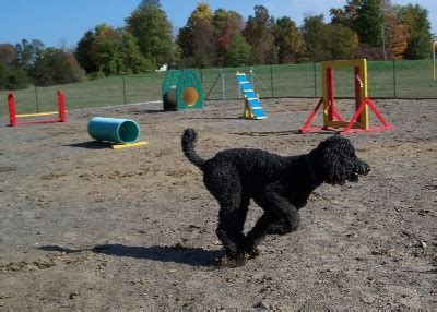 parks that allow dogs buffalo new york leash parks and friendly parks