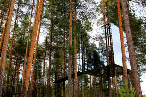 invisible tree 17 surreal buildings you to see to believe