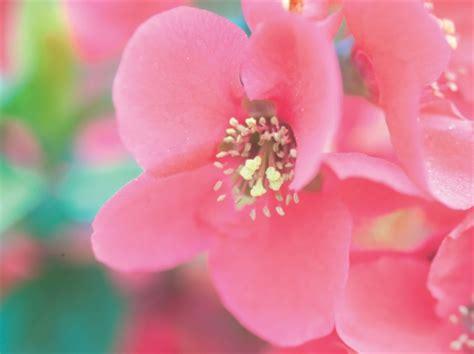 korean flowers beaches nature background wallpapers on desktop nexus image 1517202