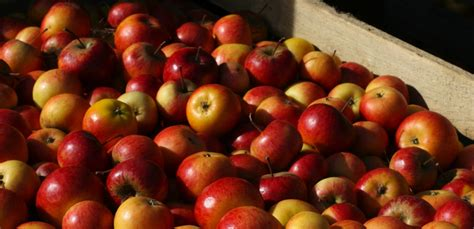 All The News Thats Fit To Eat July 25 by All The News That S Fit To Eat Banned Apples Farmed