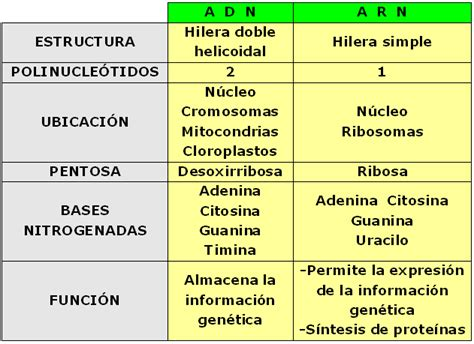 Dna 0 Resumen by Cuadro Comparativo De Acidos Nucleicos Xfiss Sii No