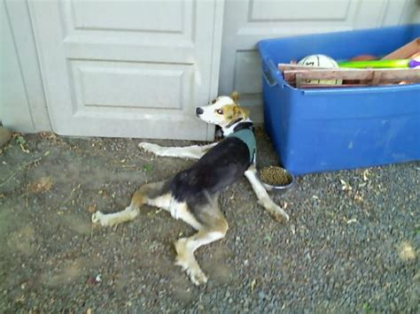 can dogs get tetanus otters i give you tetanus page 4 dvd talk forum