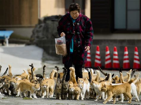 cat island in japan tourists are flocking to japan s cat island business