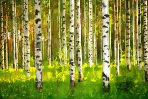 Birch Wall Mural birch forest oil painting canvas print amp photos