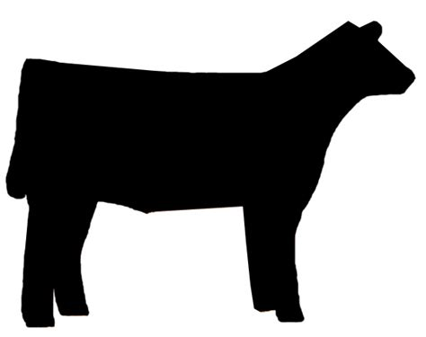steer clipart cattle show clipart clipground