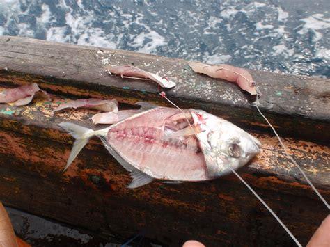 Kail Pancing Bentuk Ikan Hidup pengetahuan yang wajib diketahui para pemancing di laut