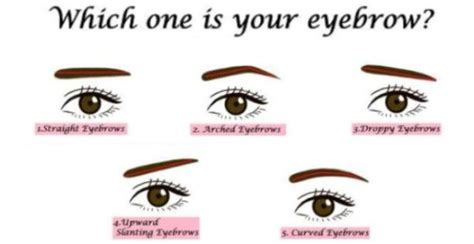 describing someones face shape 5 strange things the shape of your eyebrows say about your