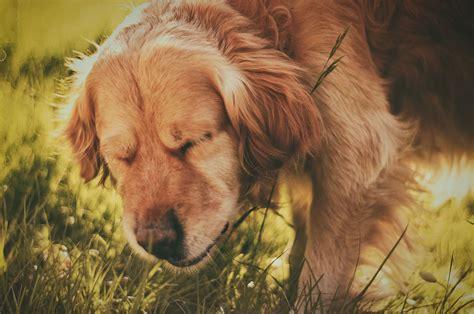 dogs sneeze dogopedia