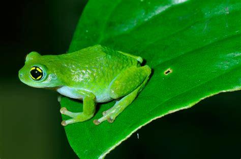 imagenes de ranitas verdes las mil caras de mi ciudad quot la rana verde de laneo