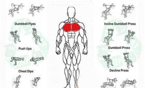 chest exercises for paperblog