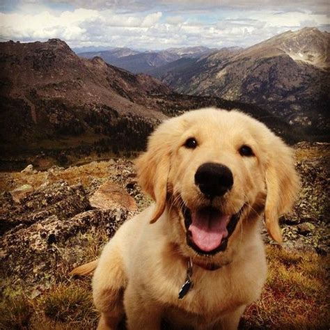 golden retriever hiking 14 things that make golden retrievers happy