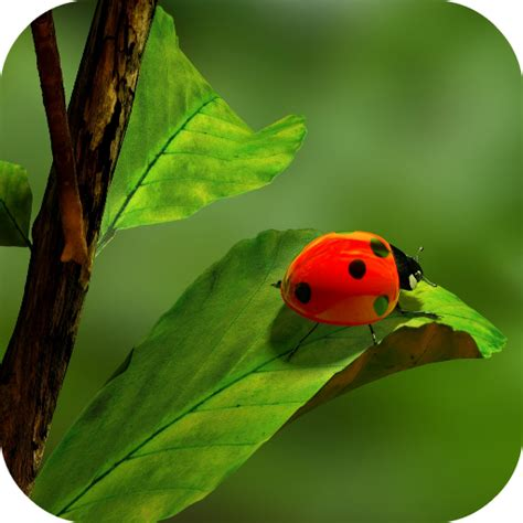 leaf green apk ladybug wallpapers appstore for android