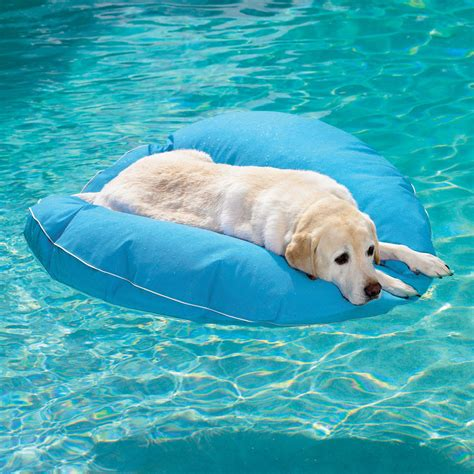 puppy pool pool float the green