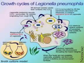 Pontiac Fever Symptoms Legionella Pneumophila