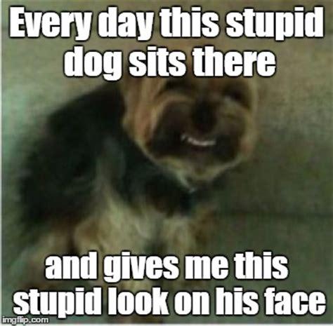 Face Sitting Meme - i think this meme is back imgflip