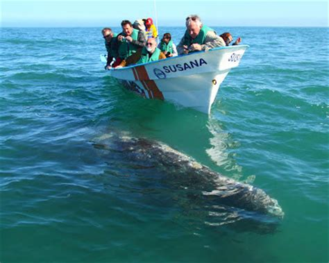 sinking boat names hitchhiking animals sailboat sinks after encounter with