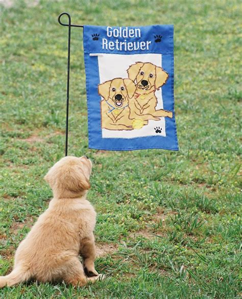 our sanity retreat golden retrievers our sanity retreat golden retrievers contact us