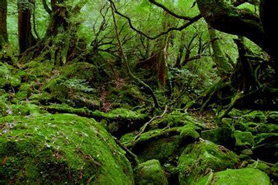 imagenes de paisajes gallegos 環境省 屋久島国立公園