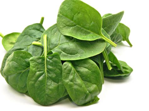 best vegetables for dogs 10 best fruits and vegetables for dogs petmd