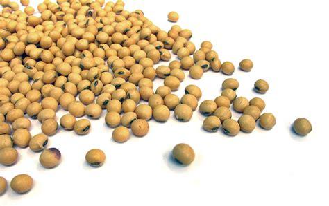 alimenti di soia soia impariamoamangiare