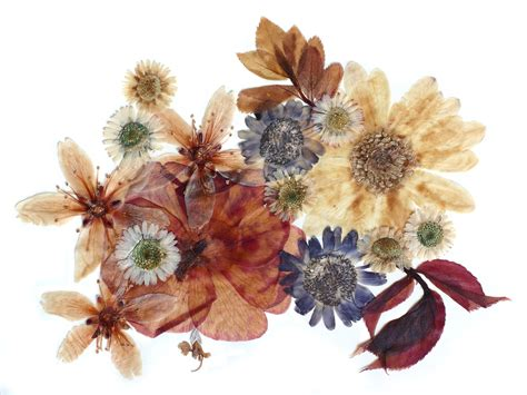 Dried Flowers by How To Use Dried Flowers Dried Flower Crafts Ideas