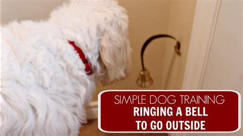how to train dog to ring bell for bathroom easy dog training ringing a bell to go outside youtube