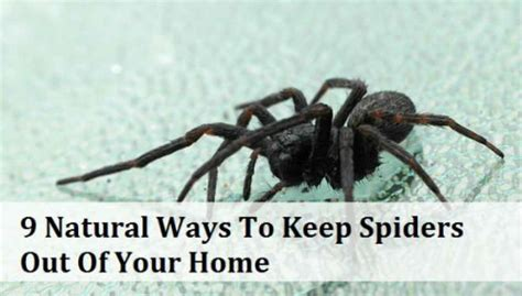 kill spiders in house 9 natural ways to keep spiders out of your home realfarmacy com