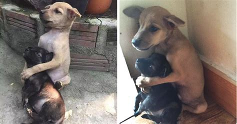 these dogs that comforted each other in shelter have now stray puppies won t stop hugging each other since they