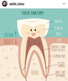 primary  permanent tooth chart  letters primary