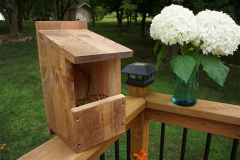 Items Similar To Robin Cardinal Box Bird House On Etsy Cardinal Bird House Plans