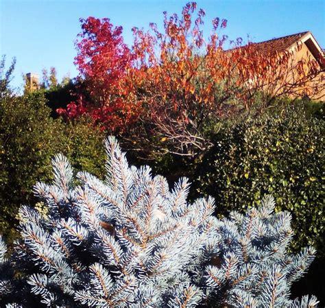 jardines y paisajismo alnus paisajismo y jardiner 237 a
