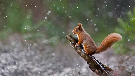 bing pictures as wallpaper squirrel bing wallpaper archive