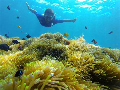 Underwater Garden by Underwater Garden Snorkeling In Amed Alienadv