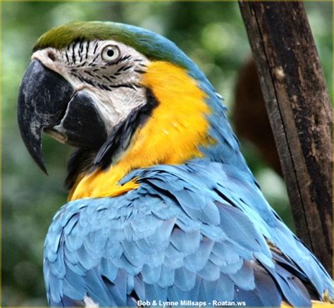 hello friends blue and gold macaw
