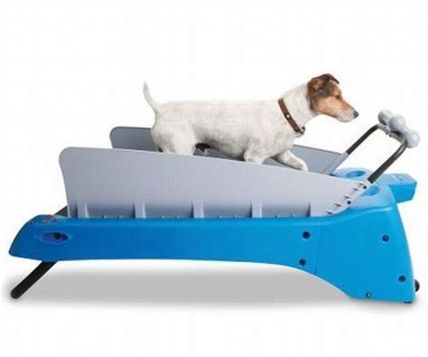 pet gadgets dog treadmill pet gadget keeps your dog healthy walyou