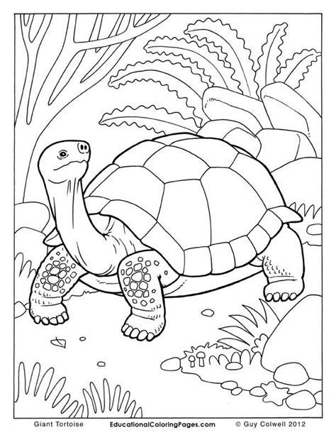 tortoise color tortoise coloring pages tortoise colouring zoo scrap
