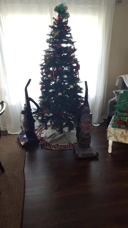 protect christmas tree from cat 20 ways to protect your trees from your pets destructive tendencies